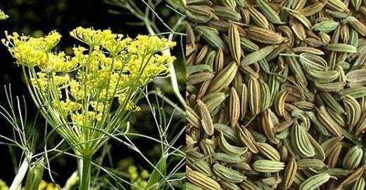 Bu Beş Şifalı Bitki İle Kilo Verebilirsiniz! İşte O 5 Bitki! 9