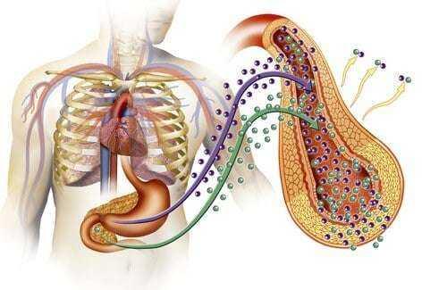 Şeker hastalığının başlıca belirtileri! Tip 2 Diyabet nedir ? 3