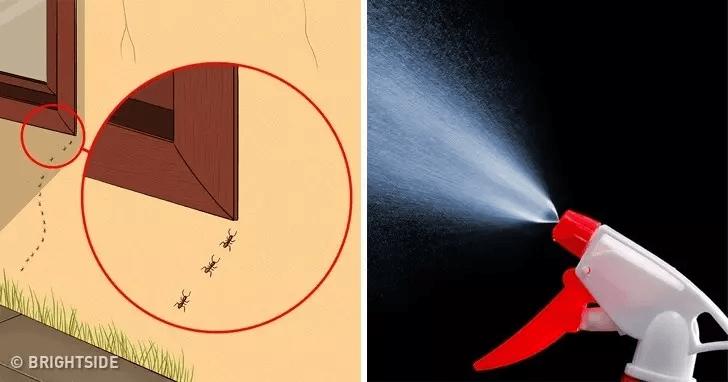 Bu Yöntemle Böcekler Kaçacak Yer Arıyorlar! 7