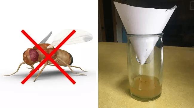 Bu Yöntemle Böcekler Kaçacak Yer Arıyorlar! 3