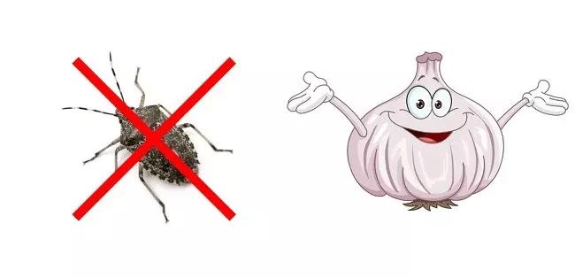 Bu Yöntemle Böcekler Kaçacak Yer Arıyorlar! 17