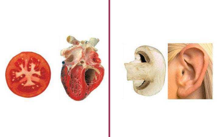 Benzediği organlara iyi gelen besinler! 1