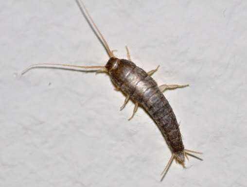 Evdeki Böceklerden Kurtulmanın Doğal Yolu 1