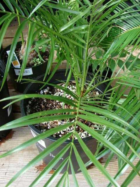 Evin Havasını Temizleyen ve Kimyasallardan Arındıran Bitkiler 1