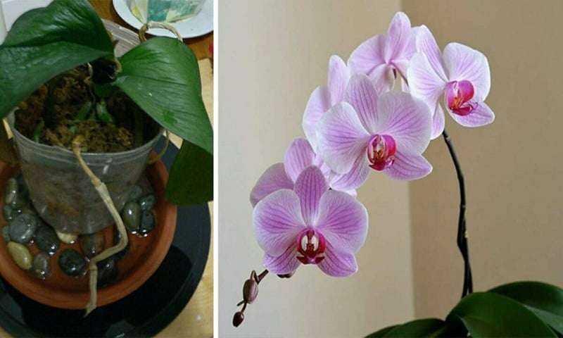 Bu Yöntemi Deneyerek İki Haftada Orkidenizin Çiçek Açmasını Sağlayın 5