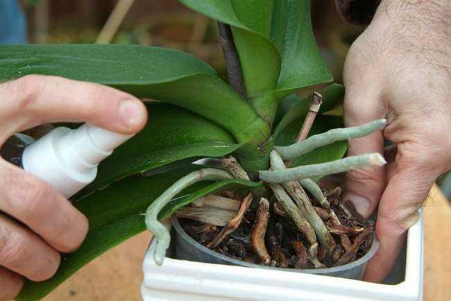 Solan Bitkilerinizi Yeniden Canlandıracak Tarçınlı Karışım 7