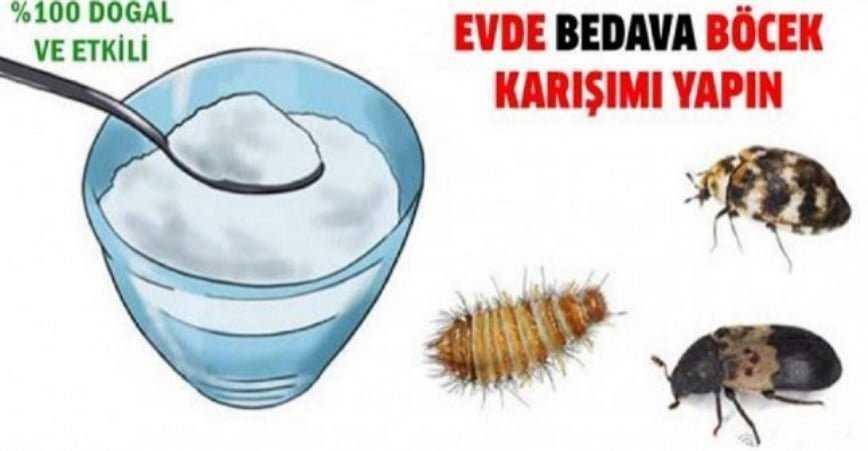 Photo of Böceklerden Kurtaran Doğal Karışım