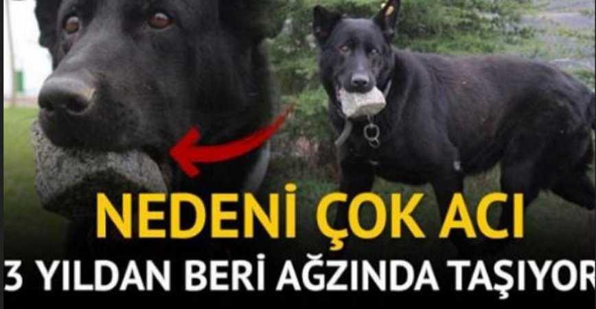 Photo of ANNE KÖPEK 3 YILDIR TAŞI AĞZINDA TAŞIYOR! NEDENİ ÇOK ACI..
